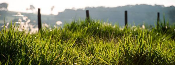 Tudo o que você precisa saber para ter um pasto produtivo